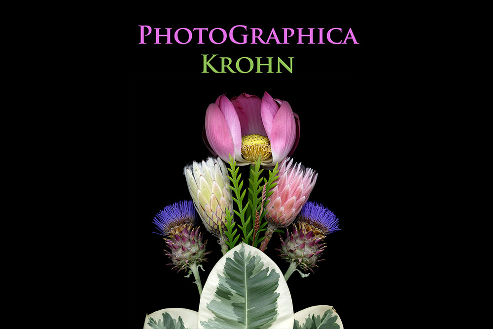 Cover of brochure for PhotoGraphica Krohn with botanical still life including pink and blue flowers, and light green leaves.