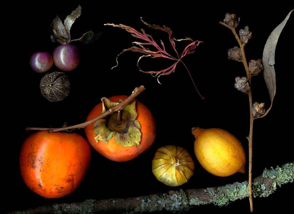 Photographic still life of persimmons, lemons, tomatillos, and other plants. Retouched Version